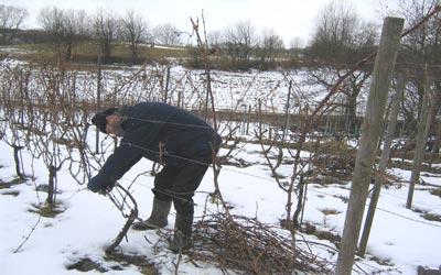 ny_vinter
